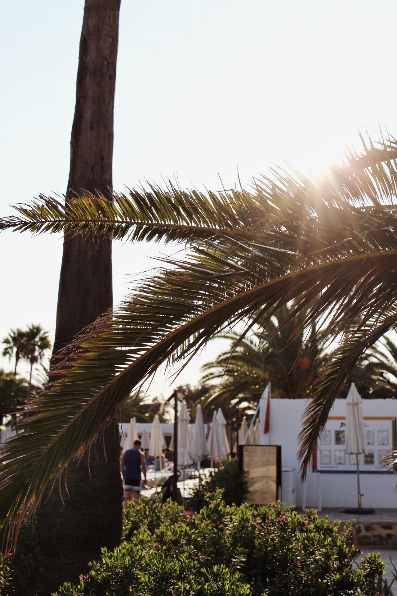Ibiza Winter Sun