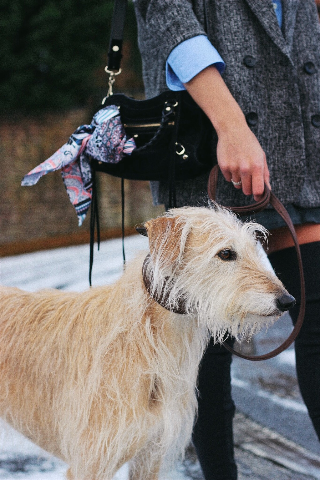 blonde long haired lurcher