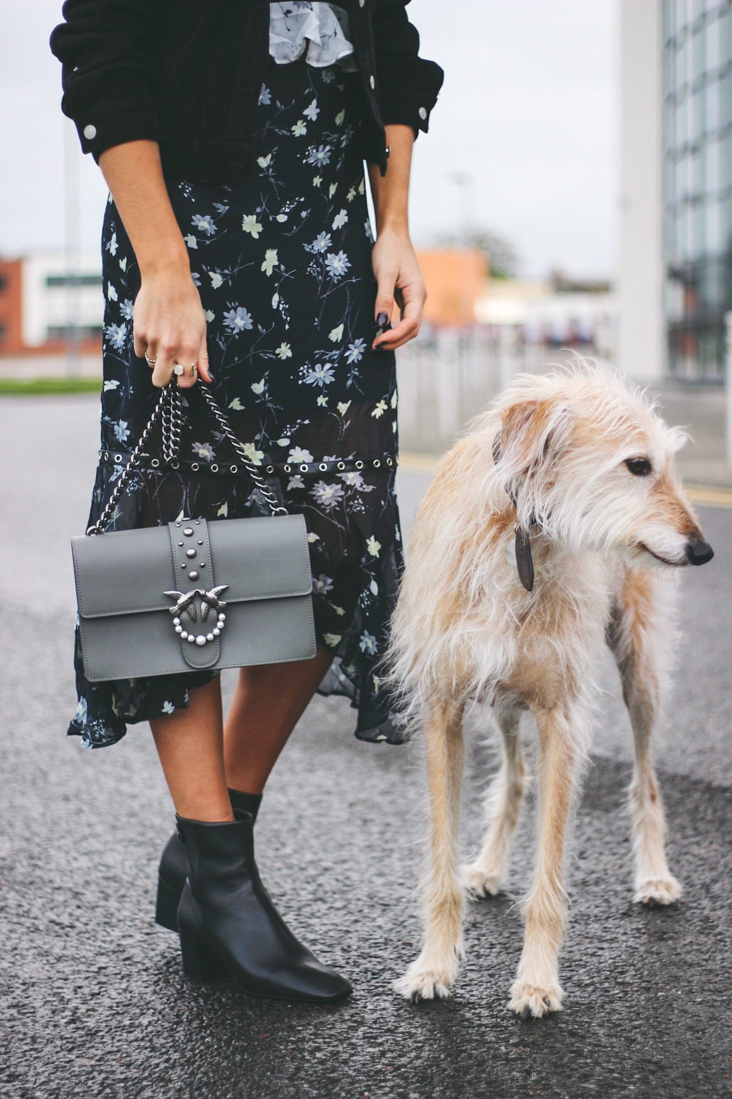 Blonde Lurcher Brody with fashion blogger Charlotte Buttrick on Lurchhoundloves