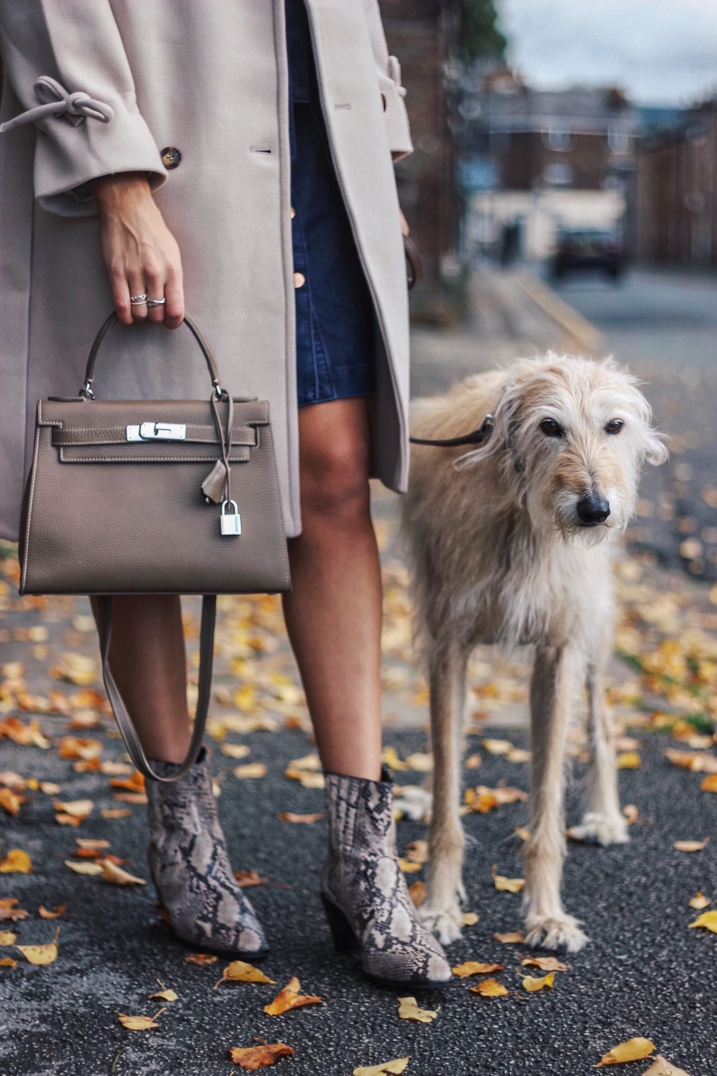 Snake Print Boots Street Style Lurcher Brody on fashion blog